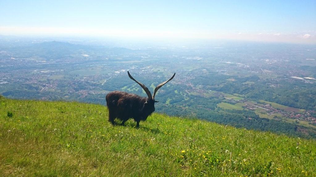 Majowo para-rajza w Alpy